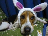 白ウサギに憧れて・・・