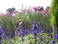 花に囲まれてたらまた虫にさされるかも!!