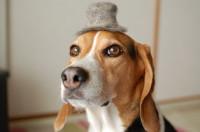 チョビ毛の帽子