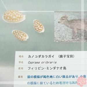 カノコ.jpg