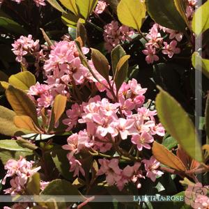 横浜Flower.jpg