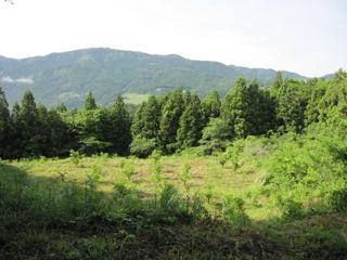 農園2011.6.jpg