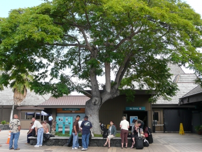 ハワイ:2008 133.jpg