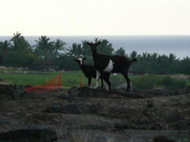 2009ハワイ 116.jpg