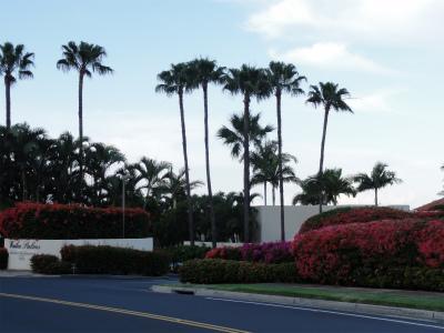 2011年ハワイ旅行全部 242.jpg