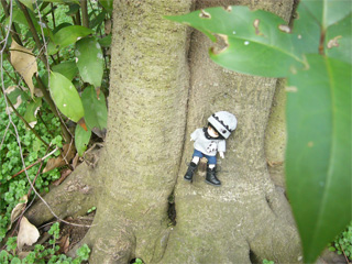 緋拠、森の中。