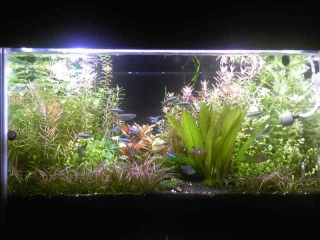 水草水槽(熱帯魚入)