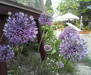 ホワホワした紫色の花。