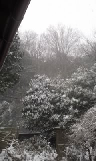 雪2/8−1