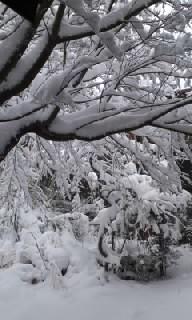 雪2/8−2