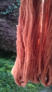 珊瑚樹染め