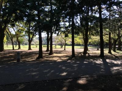 砧公園木々と木漏れ日