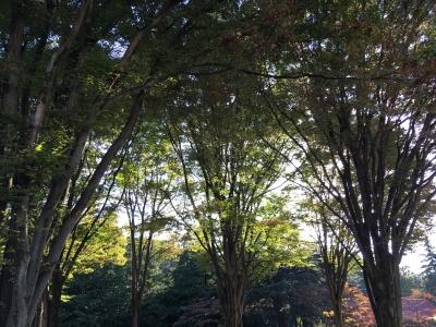 砧公園木々