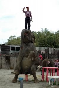 ゾウさん立ち上がる