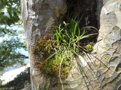 木の中から・・・頼藤直秀