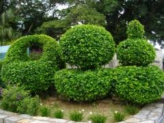 ラブリーな植木