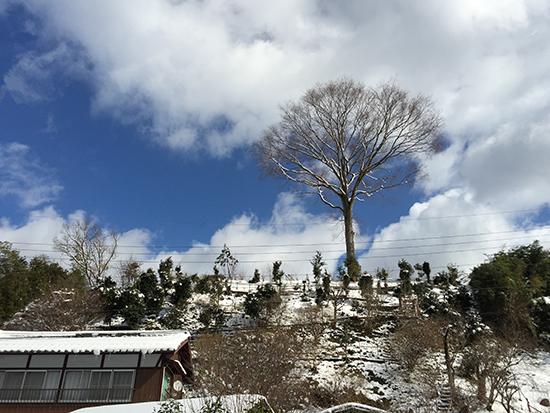 2015.2.1雪画像1
