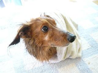 お風呂上りがとってもセクシー!