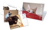 猫ネコ英語カレンダー