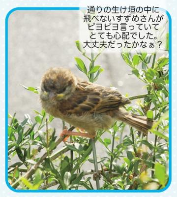 ゆるkameサロン4