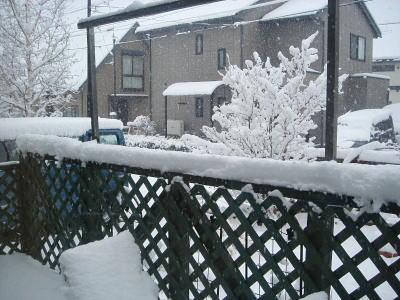 今シーズン初めての本格的な(?)雪。