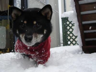 あ、雪...?