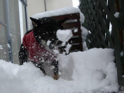 うきゃ〜♪ 雪だっ