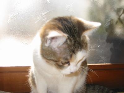 佇む猫モモ姫