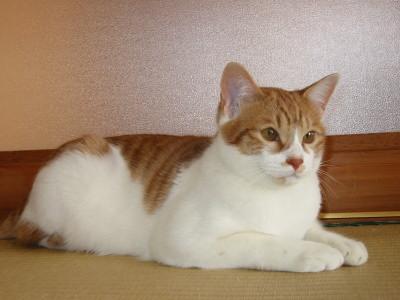 佇む猫ロイ王子