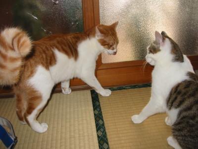 喧嘩を始めた猫