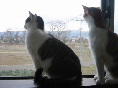 仲良く見つめる猫