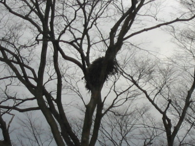 とんびの巣