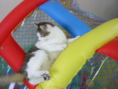 上に逃げる猫