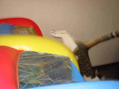 さらに逃げる猫