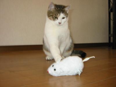 ねずみと遊ぶ猫