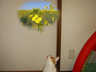 春を想う猫