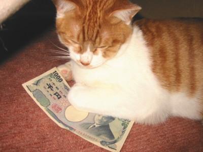 お金が気にならない猫