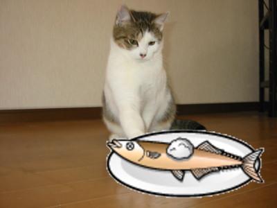 サンマを焼いた猫