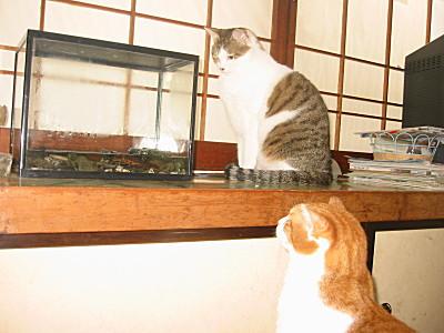 イモリを見つめる兄妹猫