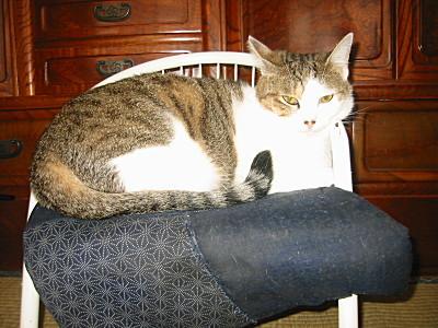 モモは子供椅子で一休み