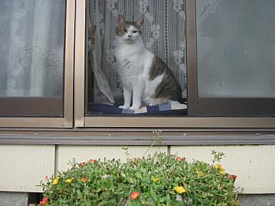 私を見つめる兄妹猫(neko)