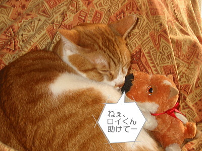 知らん顔の猫ロイ