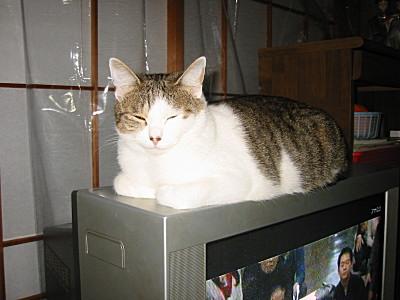 居眠りが伝染する猫モモ