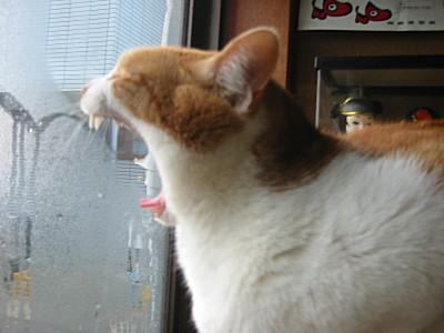くしゃみをする猫、ロイ