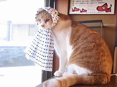 手ぬぐいをかぶる猫、ロイ