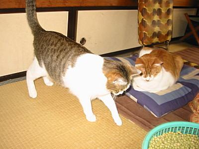 豆の行方をさがす兄妹猫