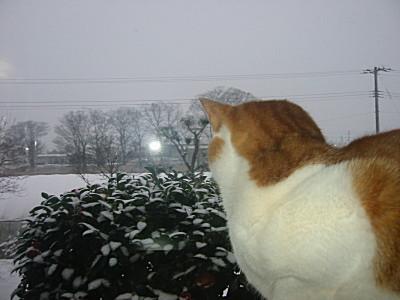 外を眺める、ロイ