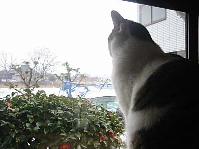 外を眺める、モモ