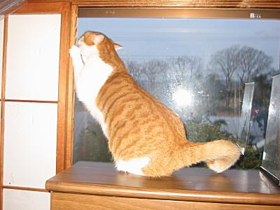 電話台の上の猫、ロイ