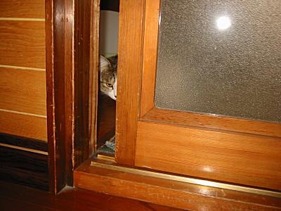 逃げようとする猫、モモ